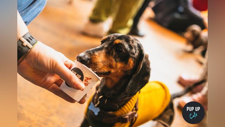Dachshund Pup Up Cafe - Southampton