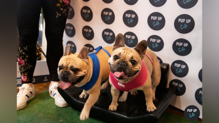 Frenchie Pup Up Cafe - Southampton
