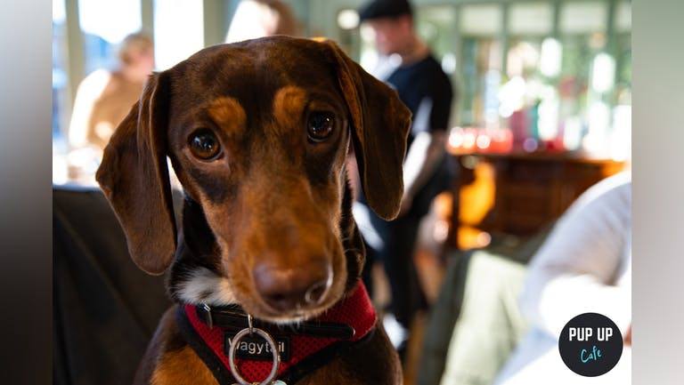 Dachshund Pup  Up Cafe - Blackpool