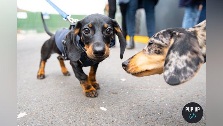 Dachshund Pup Up Cafe - Edinburgh
