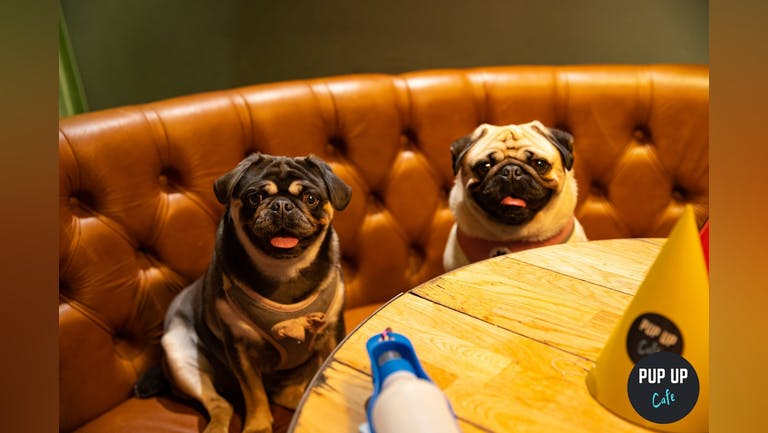 Pug Pup Up Cafe - High Wycombe