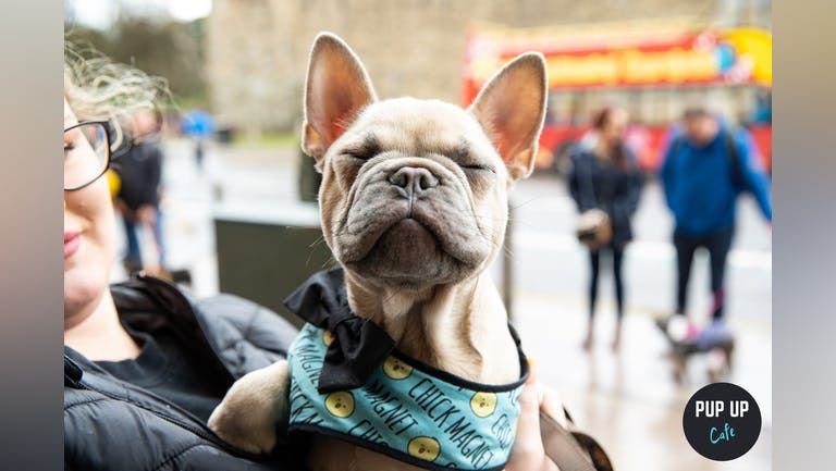 Frenchie Pup Up Cafe - High Wycombe