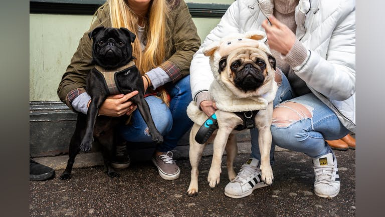 Pug Pup Up Cafe - Manchester
