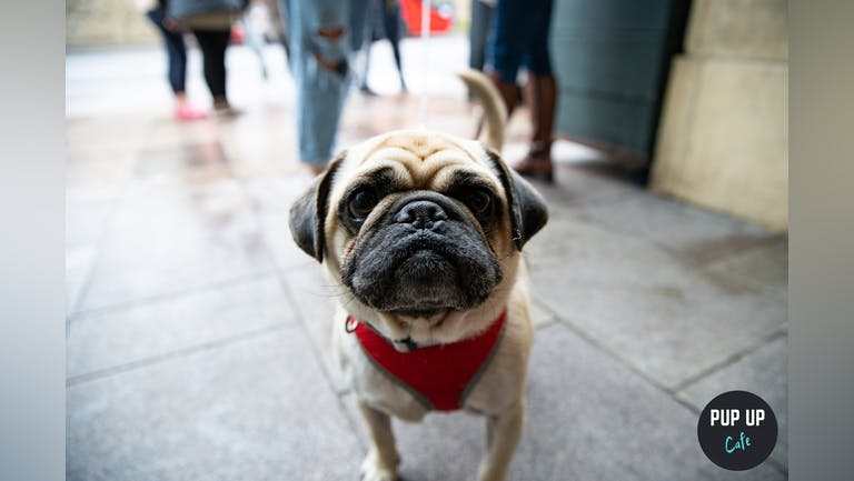 Pug Pup Up Cafe - Cardiff