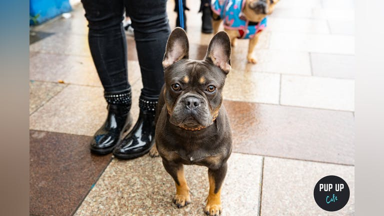 Frenchie Pup Up Cafe - Cardiff