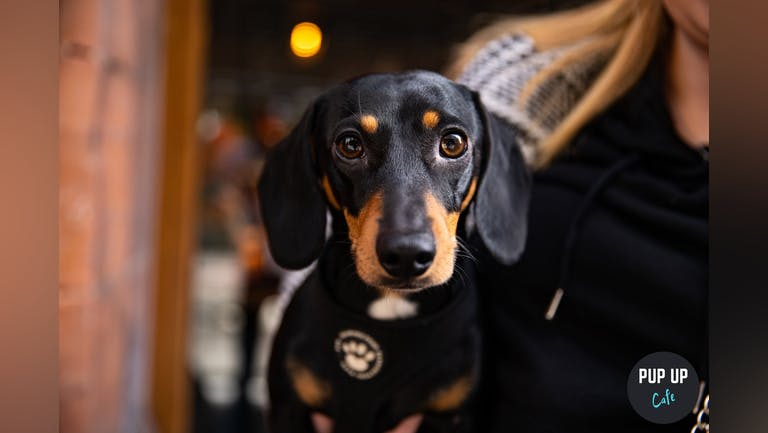 Dachshund Pup Up Cafe - Birmingham