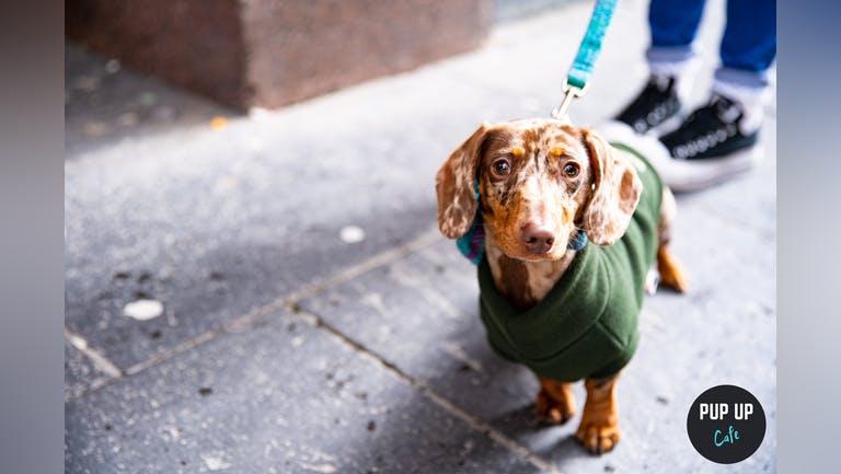 Dachshund Pup Up Cafe - Nottingham