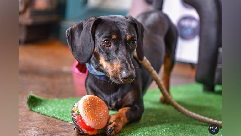 Dachshund Pup Up Cafe - Sheffield