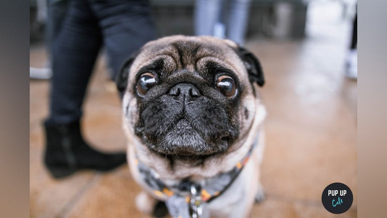 Pug Pup Up Cafe - Liverpool
