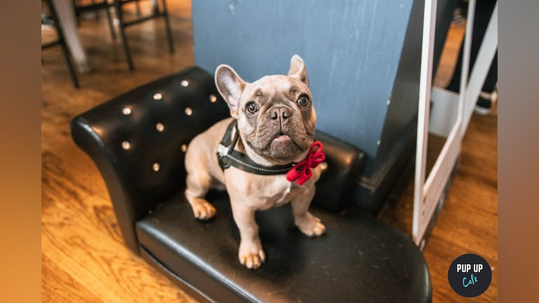 Frenchie Pup Up Cafe - Manchester