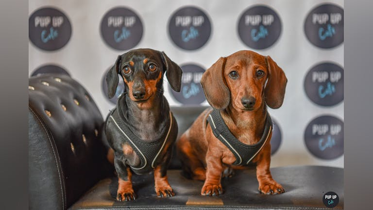 Dachshund Pup Up Cafe - Solihull